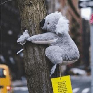 Помощь для животных Австралии собирают игрушечные коала